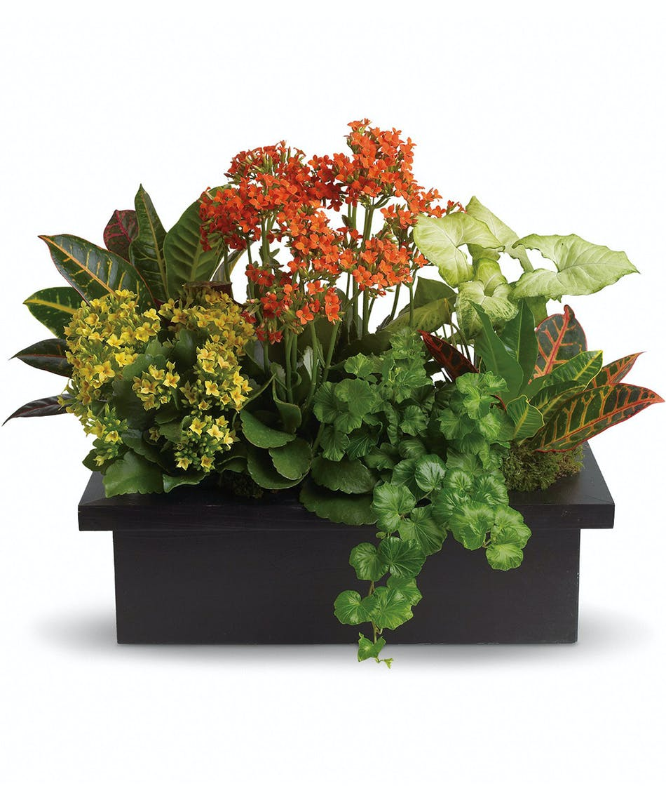A magical mix of flowering and green plants! This stylish plant assortment is simply stunning.