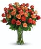 24 Citrus Roses