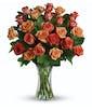 36 Citrus Roses