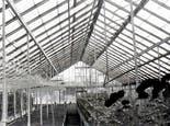 A black and white photo shows various flowers thriving inside one of our greenhouses